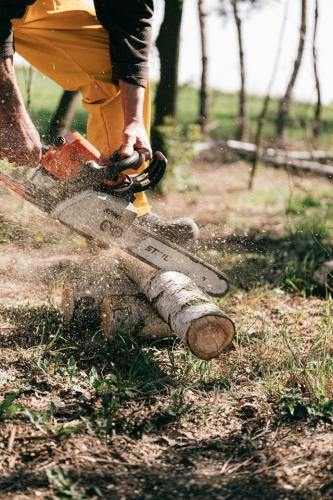 tree-cutting-2