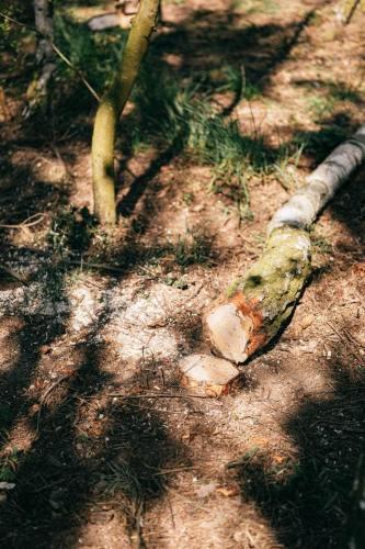 tree-cutting-3